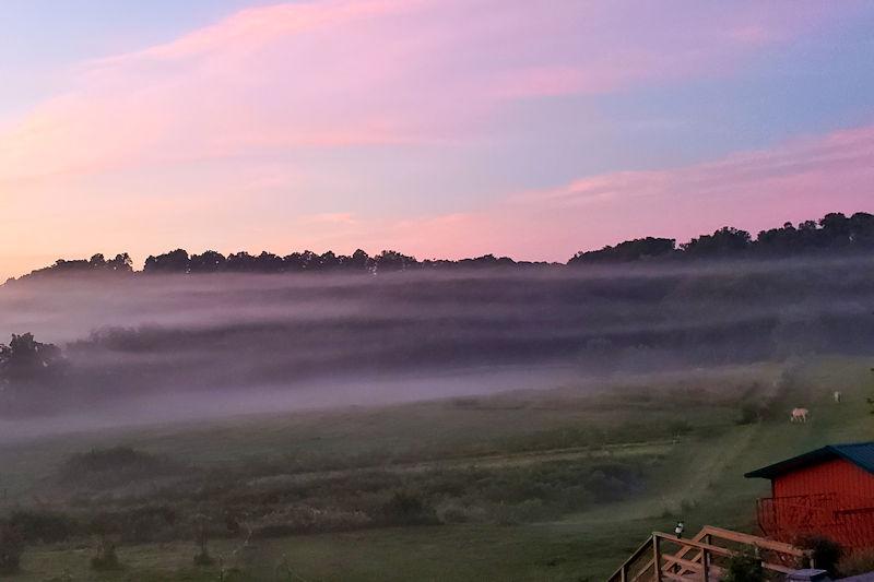 Foggy August sunrise over the elder orchard